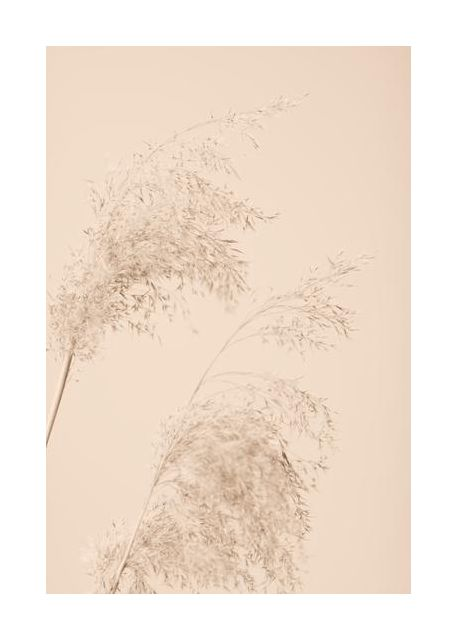 Reed Grass Beige 06