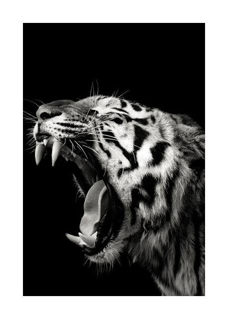 Primal Yawn #4
