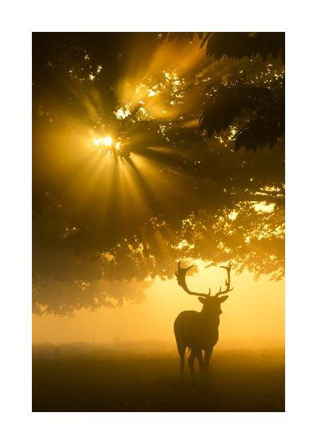 Mist on tree can't stop sunshine