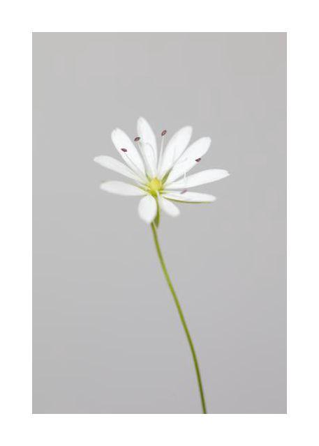 Small white flower 1