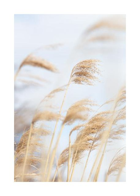 Grass Reed and sky 2