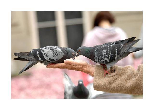 golebie na dloni