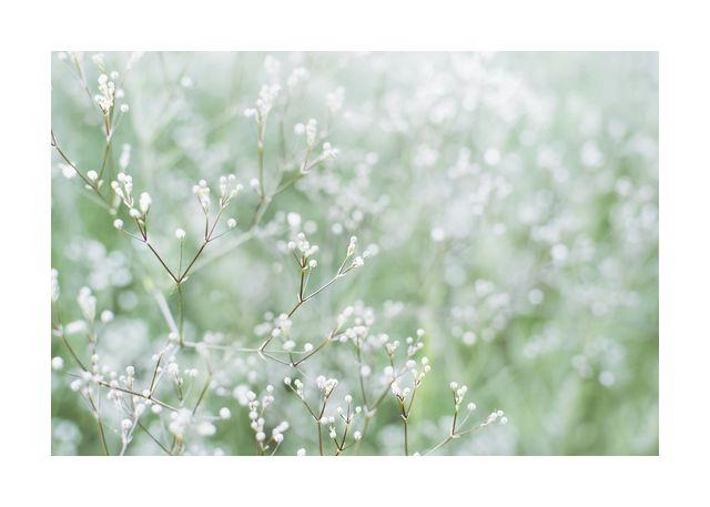 Flower buds 1