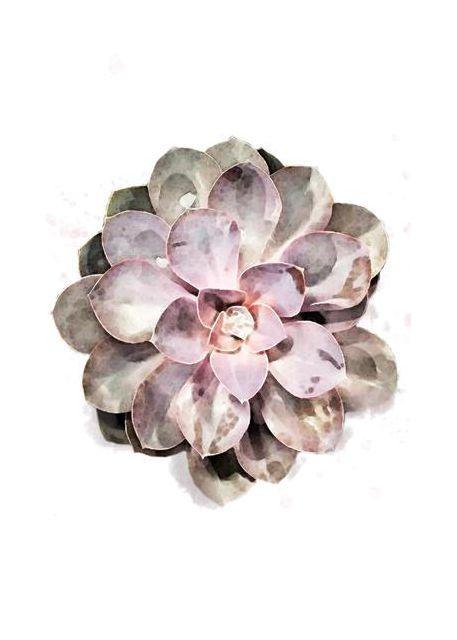 Succulent 01