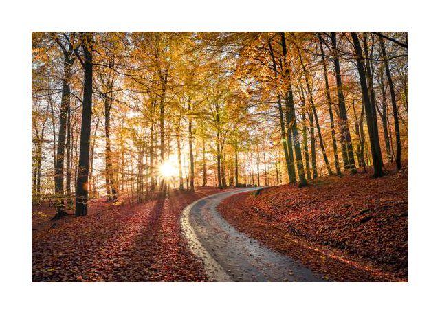 Road in SApderAysen nationalpark, Sweden