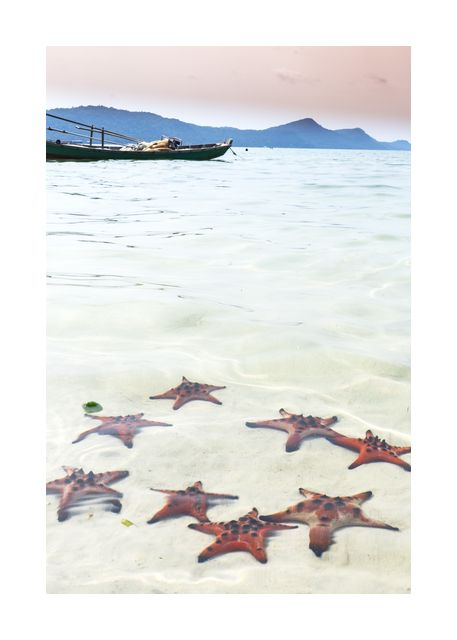 Tropical starfish beach