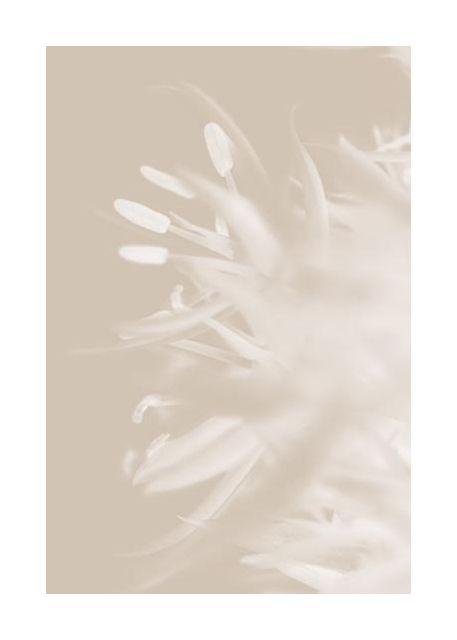 Flower Beige 1